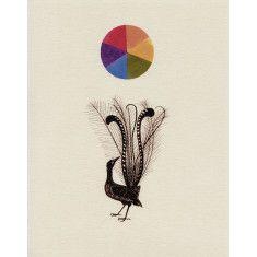 The amazing lyrebird print