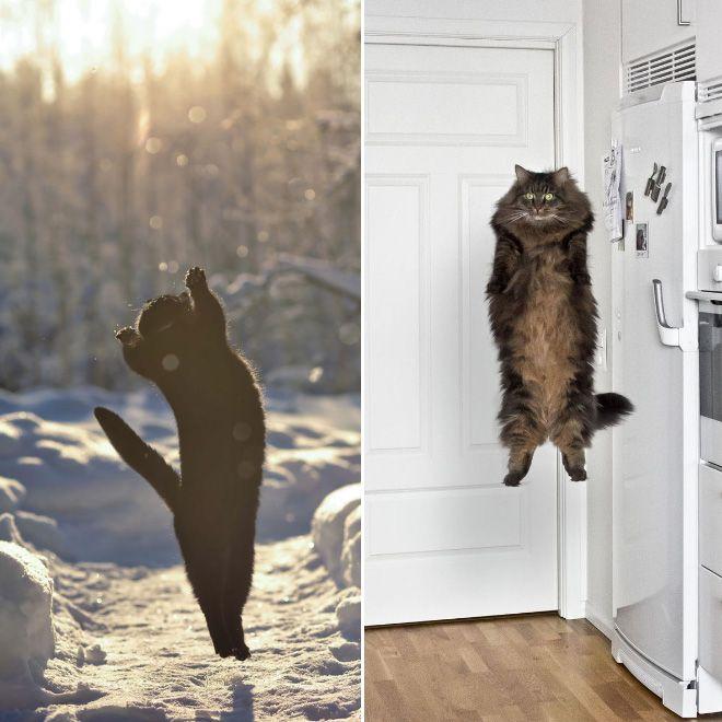 Des chats qui sont rappelés par leur vaisseau-mère.