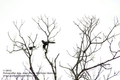 Especie de aves en Colombia Utica Cundinamarca
