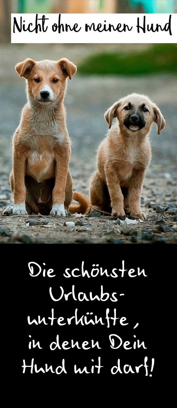 Entdecke tolle Urlaubsunterkünfte für Deinen Urlaub mit Hund! #urlaubmithund #… – nhaj.a