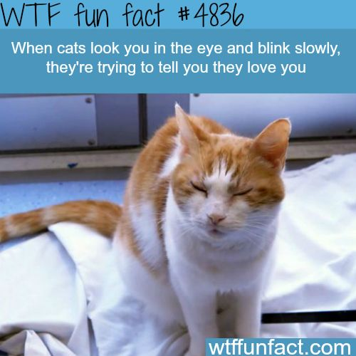 When cats look at you and blind slowly - WTF fun facts
