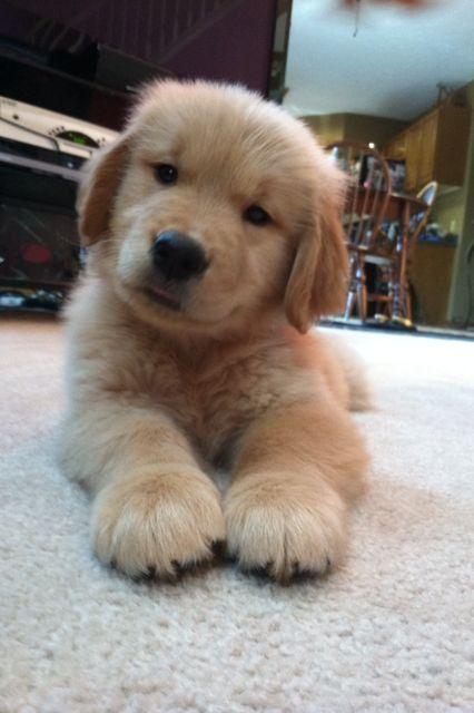 puppy says hello