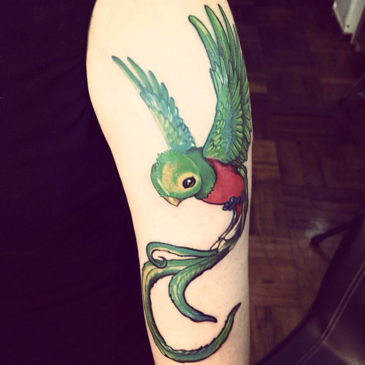 Quetzal: Latinoamerican symbol of freedom. Made by Sick Ness. Santiago, Chile. Tumblr