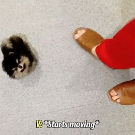 Yeontan is sMALLER THAN HIS FUCKING FOOT IM SO SOFT