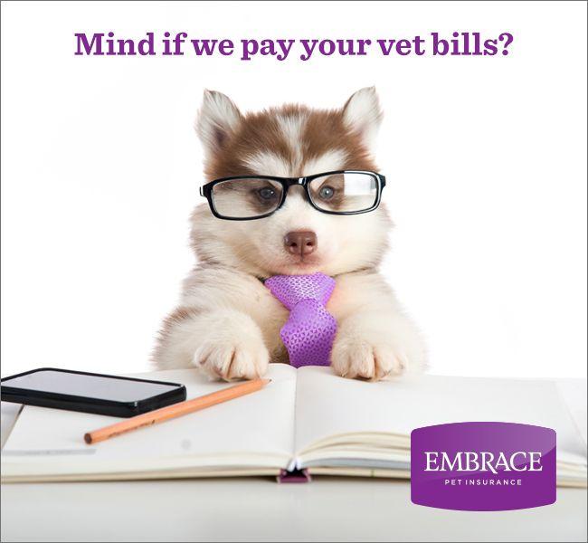 25 best ideas about embrace pet insurance on pinterest