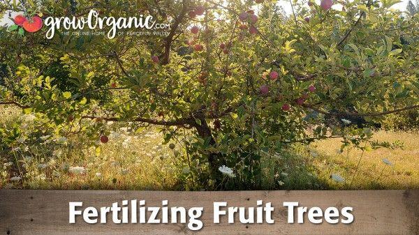 Fertilizer Requirements For Plums How To Fertilize A Plum Tree