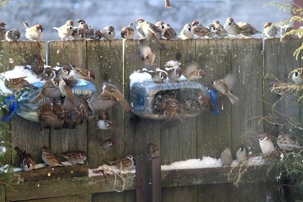 gerecycleerd ambachten voor kinderen en volwassenen, met de hand gemaakte vogel feeders recycling van plastic flessen