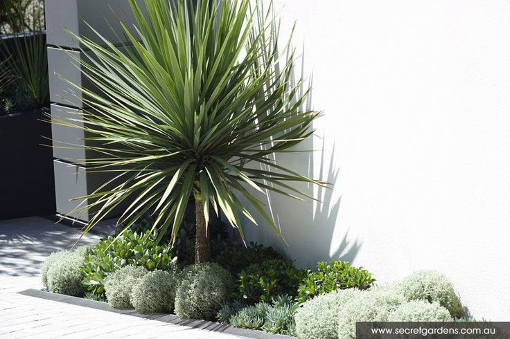 Garden Design: Caringbah | Secret Gardens.  Waterwise plants. Love this.