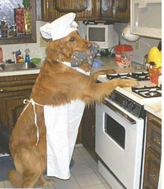 WHO is cooking? - - photos for working on WHO questions - - Pinned by @PediaStaff – Please Visit ht.ly/63sNt for all our pediatric therapy pins