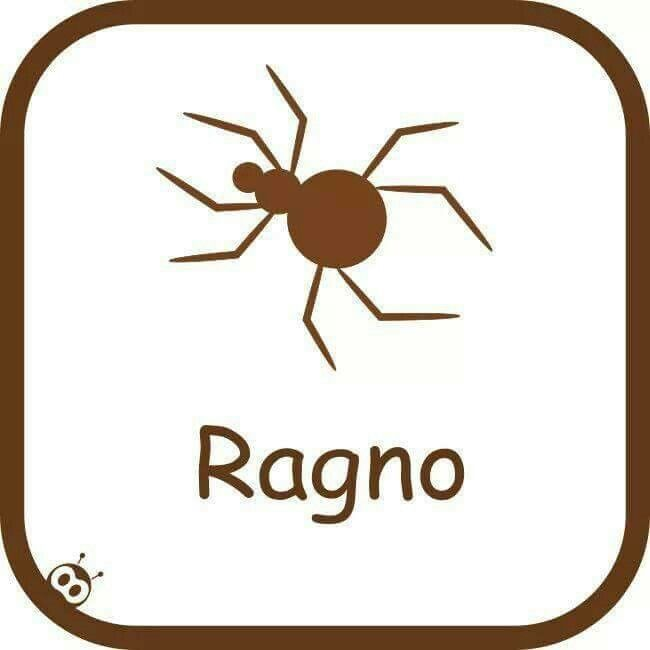 Ragno: Araña