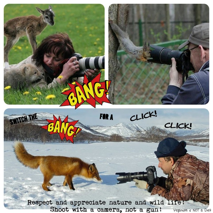 shoot animal with camera not gun Short essay on shoot animals with camera not with gun next reason and nature essays in the theory of rationality.