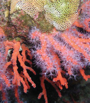 Elbacard - diving isola d'elba