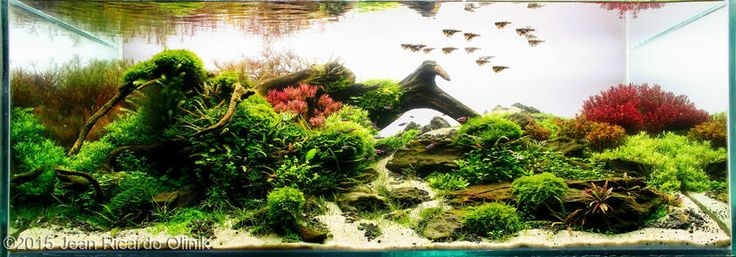 2009 aga aquascaping contest entry 199 2009 aga aquascaping contest ...