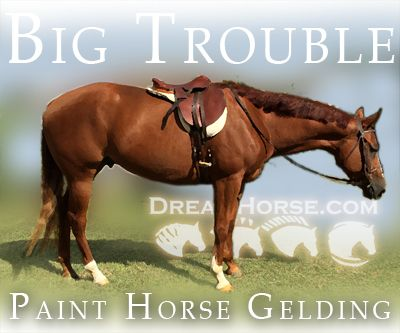 Sorrel APHA Paint Gelding, Beautiful mover Out of the Big Sensation in Texas. DreamHorse.com is the premier horse classifieds site with horses for sale, lease, adoption, and auction, breeding stallions, and more.