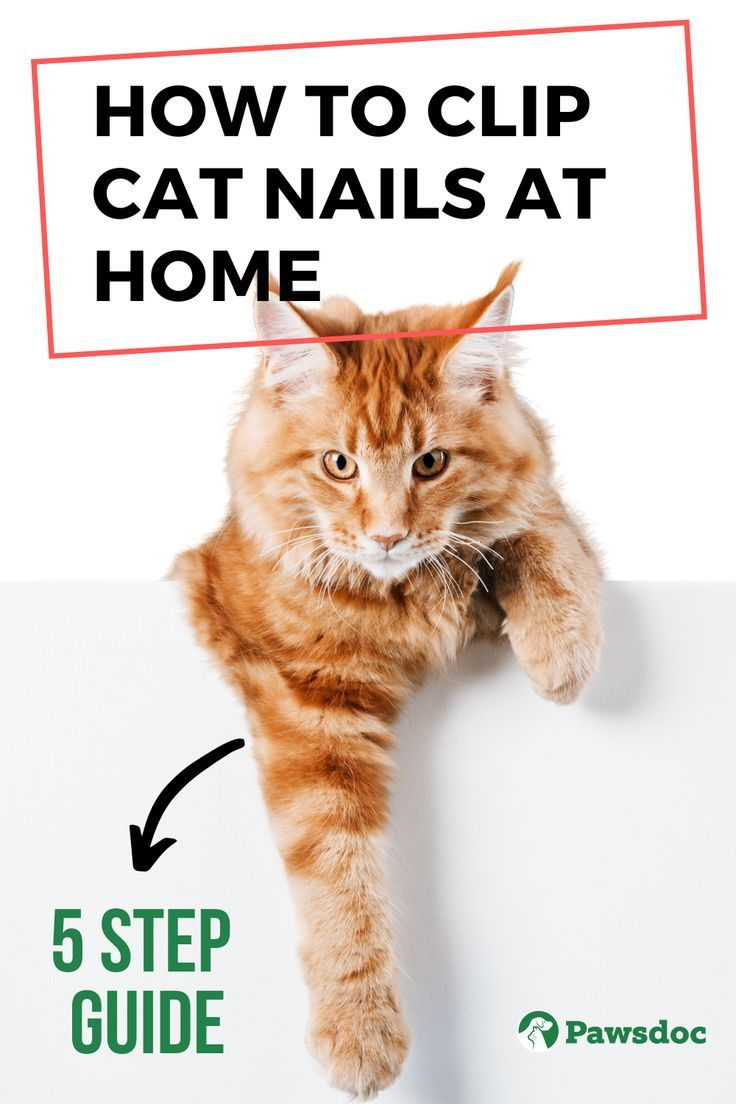How To Clip Cat Nails 5 Steps To Trim Your Cat S Claws At Home In 2020 Cat Nails Clipping Cat Nails Cat Care