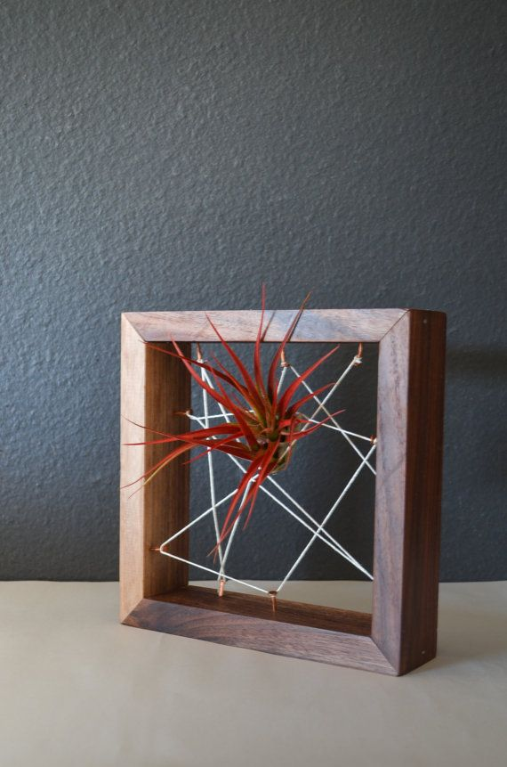 Air plant Black Walnut Recycled salvaged wood plant holders. Vase, wall decor, geometric, terrarium wedding birthday Valentines gift