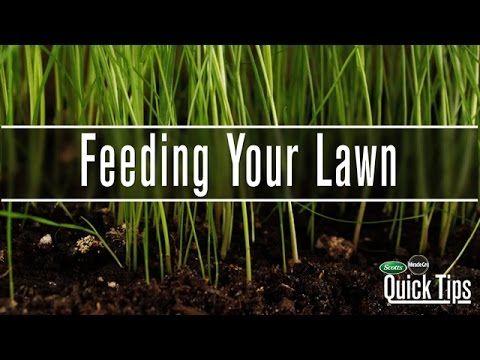 Fertilizing Your Lawn | Scotts Miracle-Gro Canada - YouTube