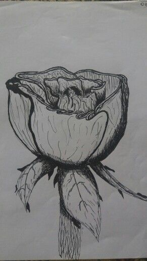 Roses!!!! Aaaarrrgh :) #roses #drawing