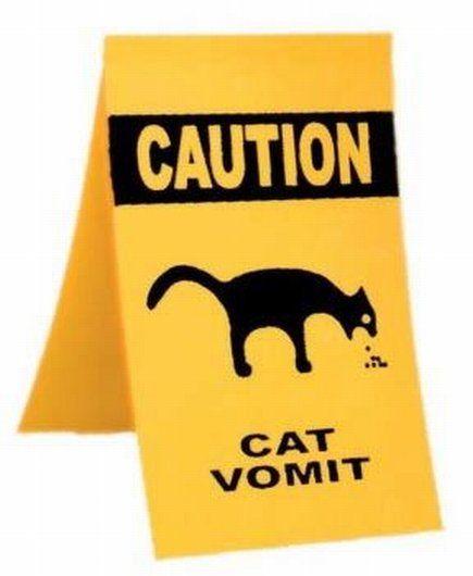 Need!Animal Lovers, Cat Funny, Pets, Funny Stuff, Fur Kids, Cat Stuff, Kitty, Gotta Laugh, Adorable Animal
