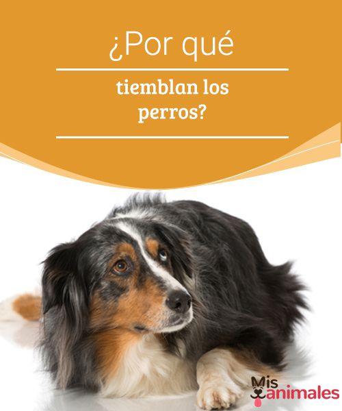 ¿Por qué tiemblan los perros? -Mejor con Mascotas Os queremos hablar de por qué tiemblan los perros, algo que puede no tener importancia, pero que a veces están relacionados con alguna enfermedad.