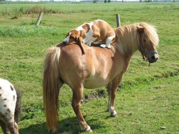 Let Me Tell You About My Best Friend: Animals, Dogs, Friends, Horses, Pet, Funny, Photo, Bassethound