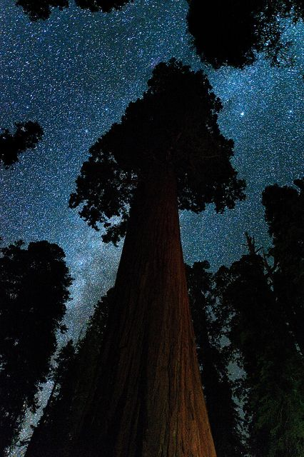 : Giant Sequoia, Sequoia National, Starry Night, Bridesmaid Gifts, Redwood Forests, National Parks, Oregon Trees, Justin Kern, Milky Way
