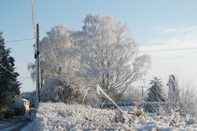 Snow and frost covered trees.