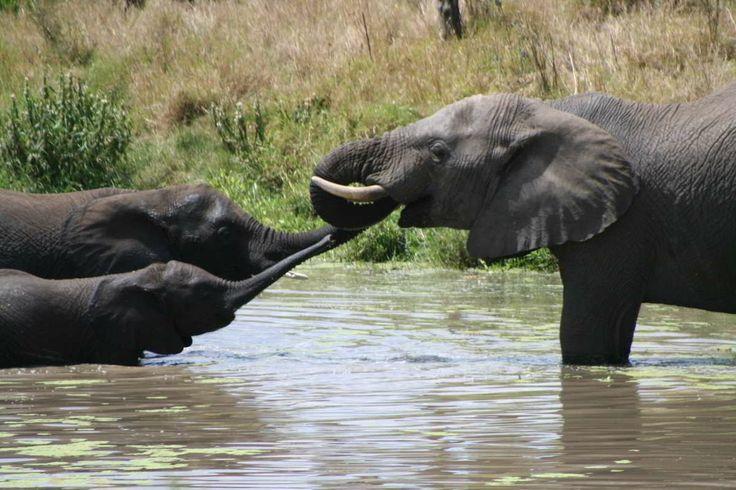Safari in Kenya e Tanzania, Viaggio di Gruppo in Africa http://www.grandiorizzonti.it/destinazioni/tanzania