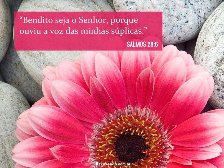 """""""Bendito seja o Senhor, porque ouviu a voz das minhas súplicas."""" Salmos 28:6"""