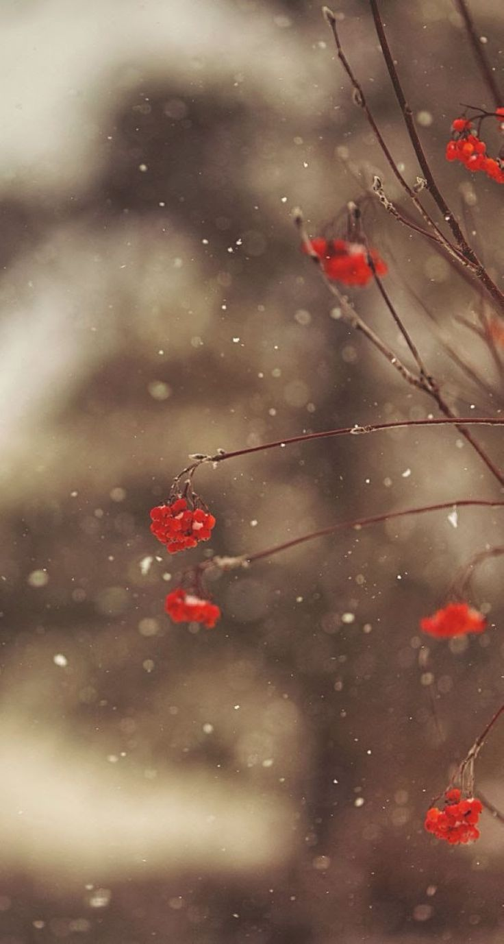 """hello winter"" iPhone 6 wallpaper - Google Search iPhone X Wallpaper 528187862532589918 3"
