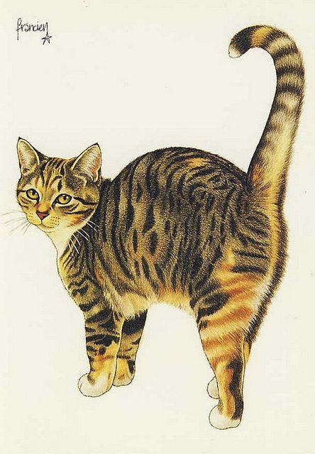 Cards, Cats-Art, Francien.van.Westering - 86 | Flickr - Photo Sharing!