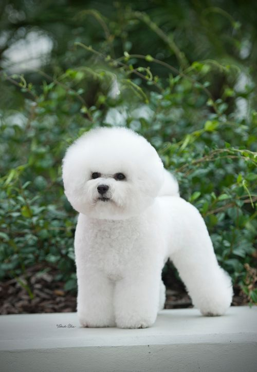 Never got to meet Aunt Cathy's Bichon Frise. That would have been fun!