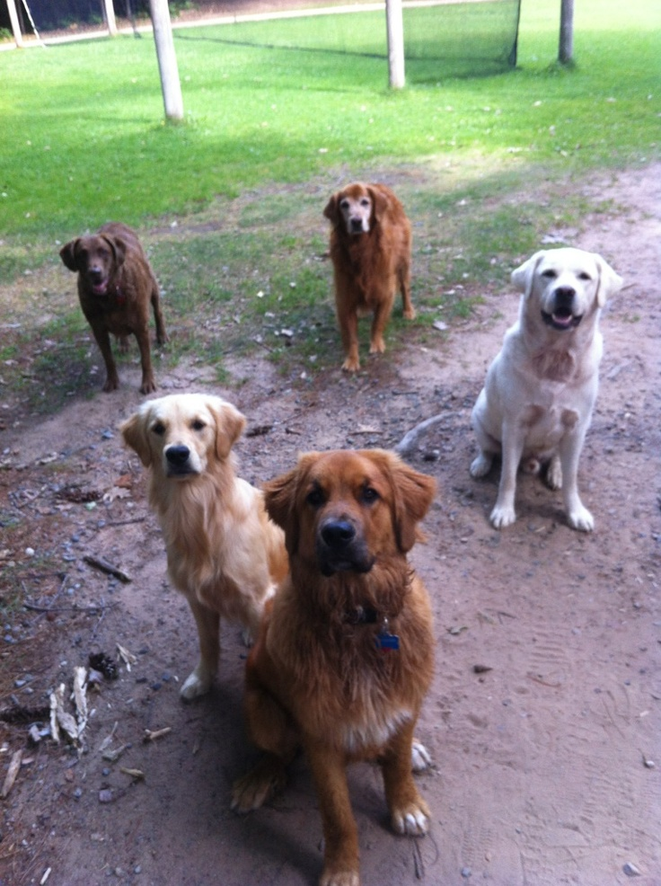 All the Deerhorn dogs are hoping to get pancakes after breakfast...Rio, Jesse, Iz, Rooster, and Koda. Head to our website to meet all of the Deerhorn dogs. www.deerhorn.com