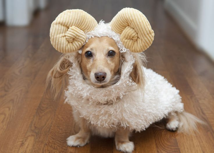 Your dog will have every head turning in this too-cute ram costume. Don your pet in fluffy white and add signature curved horns on the head.