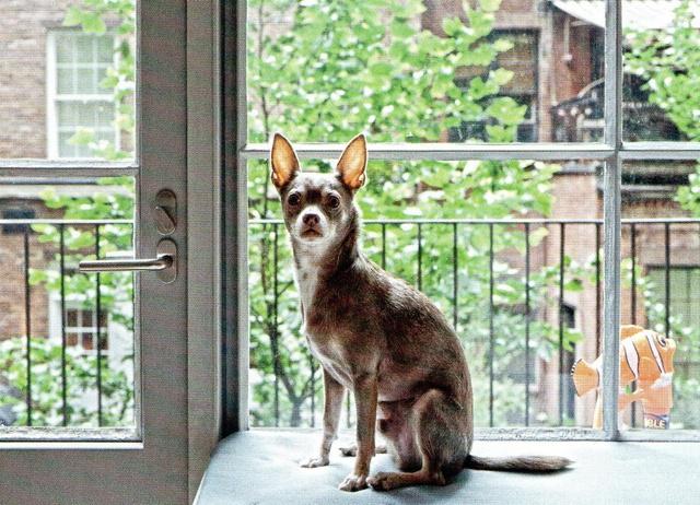 James Jebbia's Greenwich Village Loft 9