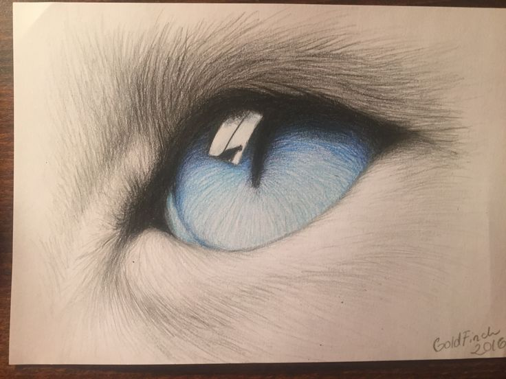 #cat #eye #coloured #pencils #koh-i-noor #art #drawing #fur   By GoldFinch :3