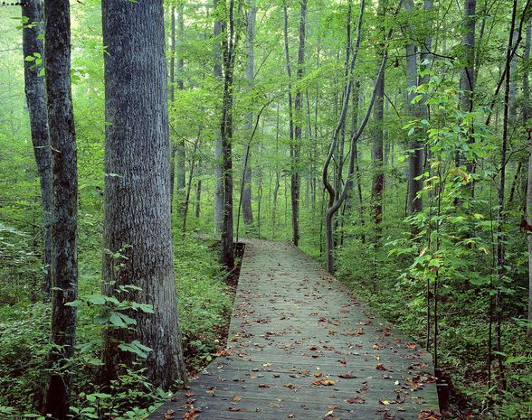 10 places to hike in the Triangle