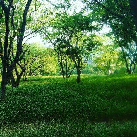 Parvathi Hills, Pune ,India