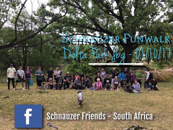 Schnauzer Friends Funwalk  Johannesburg 01/10/17