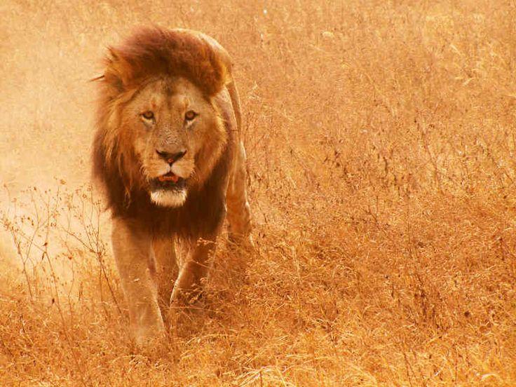 Dzikie zwierzęta | afryka.biz.pl - wiedza i aktualne informacje, mapy - atlas, filmy