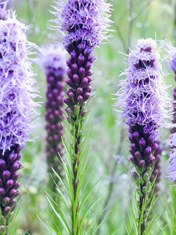 Best Border Garden Full Sun Images On Pinterest Border Garden