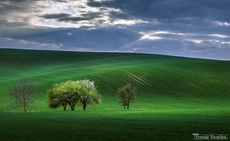 """Během dne, kdy vůbec nebylo pěkné počasí, začalo na chvíli zpoza mraků prosvítat slunce. Jeden z paprsků ozářil tři stromy, kterým někteří mí kolegové fotografové říkají """"tři nevěsty""""."""