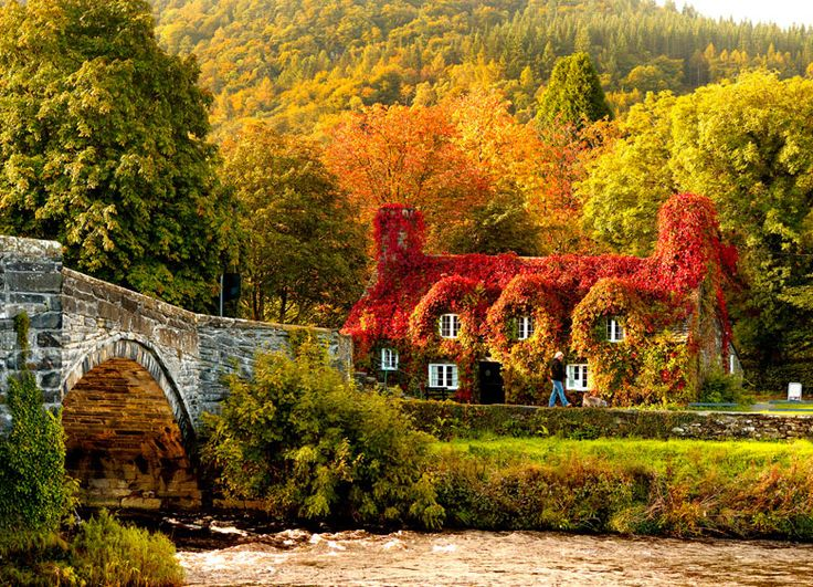 Autumn colours surround the Tu Hwnt i'r Bont tearooms on the banks of the River Conwy  - north Wales