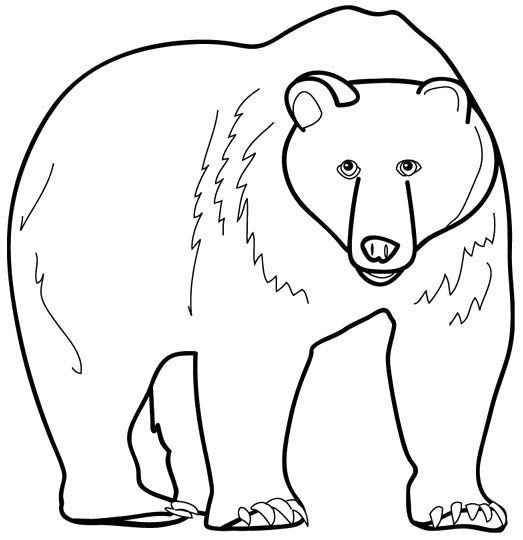 Big brown bear coloring pages ~ 17 Best images about coloring pages for kids on Pinterest ...