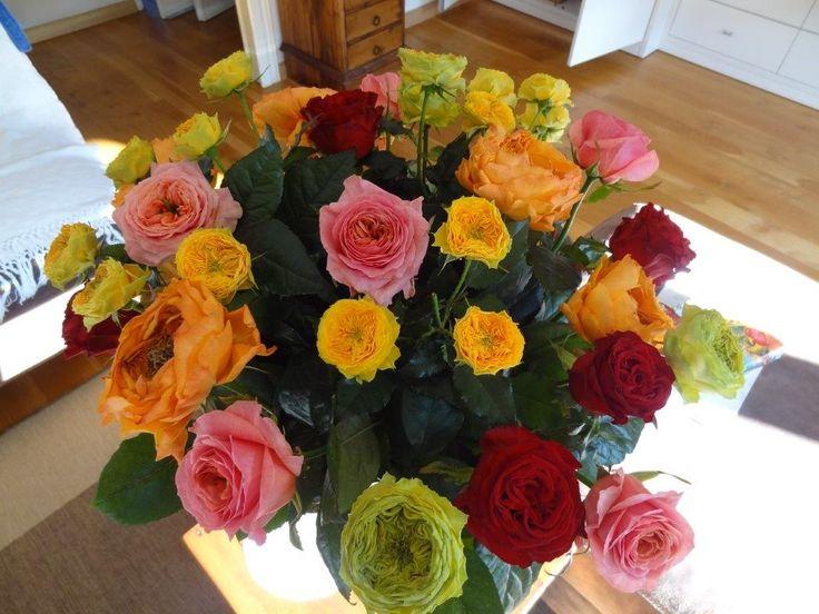 Les roses  Caraluna entre autre