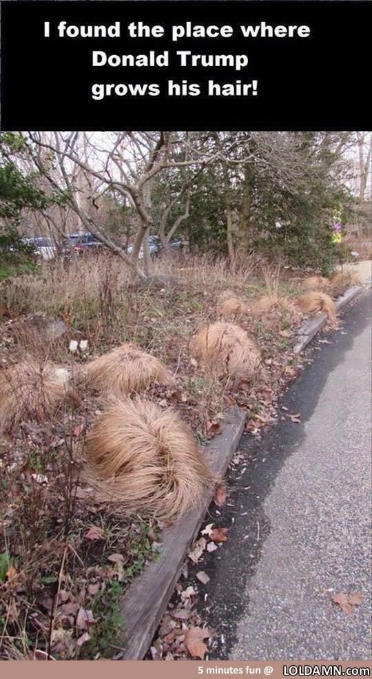 Someone found the place where Donald Trump grows his hair...                                                                                                                                                                                 More