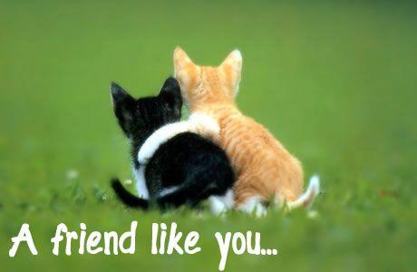 Ik ben iemand die rekening houd met hoe ik met anderen om ga. Ik hecht veel belang aan mijn vrienden en ik probeer deze vriendschappen zo goed mogelijk te onderhouden.