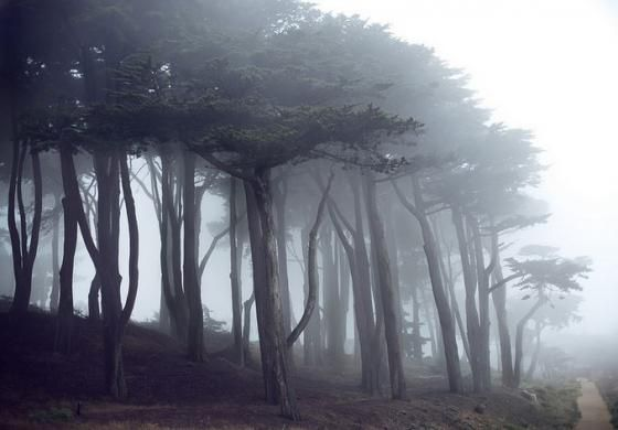 Fog enschrouds Monterey Cypress trees along the Coastal Trail at Lands End. / Photo by Alexandre Normand