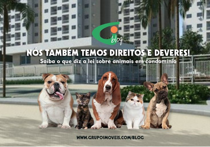 Animais no condomínio: saiba o que diz a Lei