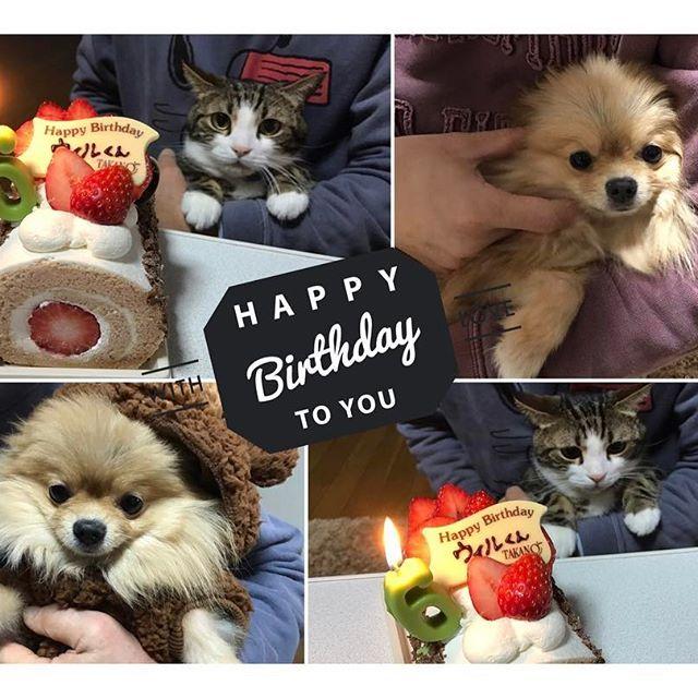 ウィルくん6歳になりました🐱💕 ぱぱままかいちゃんとお祝い🎉 くーちゃんもお洋服プレゼントして もらってた🐶🎁 . ウィルくんこれからも健康で元気でいてね🐱❤️ ウィルくんくーちゃんのいる生活は とっても幸せです💕 . 今日やっと念願のローグワンも見れた❤️ 大好きな人と過ごす最高な週末(*´ω`*)💕 . #愛猫 #mycat #family #❤️ #猫のいる暮らし #犬のいる暮らし  #幸せ #大好き #お誕生日おめでとう#birthday #birthdayboy #🎉 #6 #starwars #rougueone #おもしろかった #今日寒すぎ #かいちゃん #mine